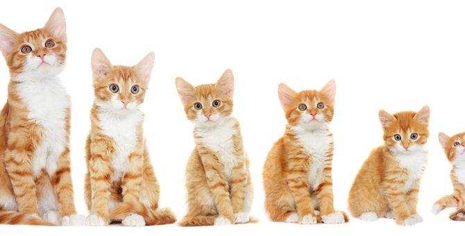 子猫の体重を月齢ごとに紹介!測り方や適した餌の量
