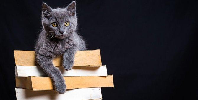 ネコヅメのよるはどんな絵本?猫好きが夢中になる理由やあらすじ