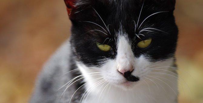 猫を飼っている家の中で凶器になるもの3つ