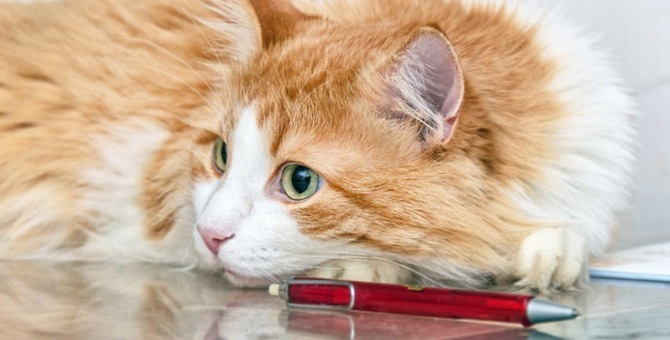 人気猫種とコラボ?!エナージェル猫柄ボールペンについて