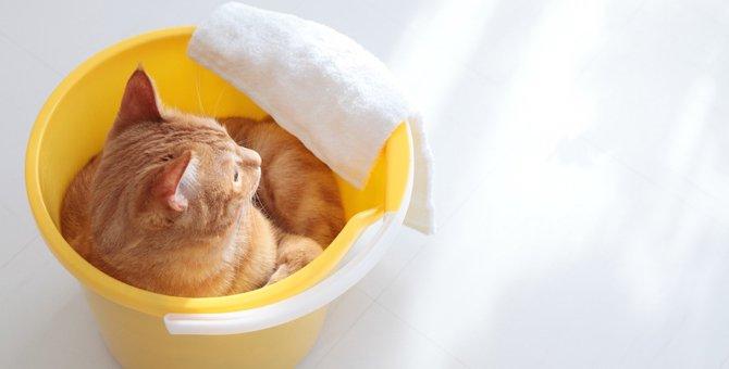 部屋が猫臭い…綺麗にお掃除する5つのポイント