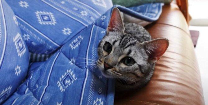 何があるの!?ソファのマットで何かを探す子猫ちゃん!
