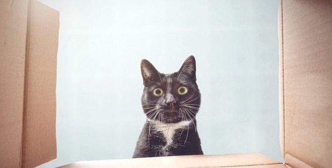 猫が『危険』を察知したときにする行動4選