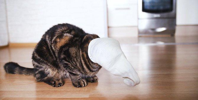 猫が飼い主の『靴下』を隠す4つの理由と対処法