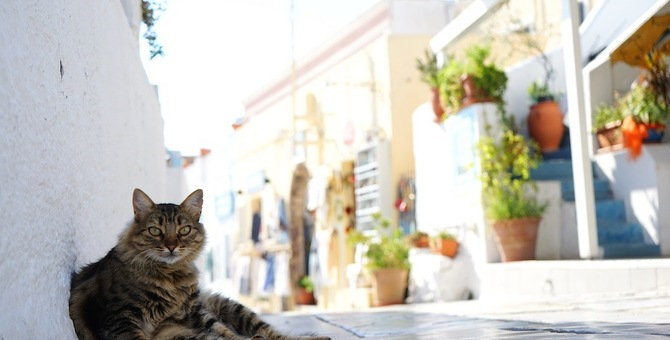 ギリシャは猫の楽園だった!野良が多い理由や有名スポット