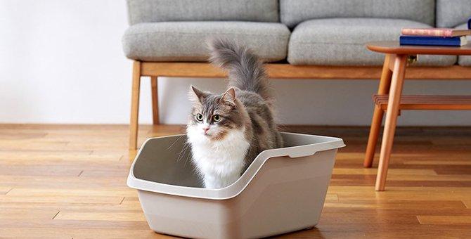 猫のトイレ「HY cat」新発売!完璧すぎるその特長とは?