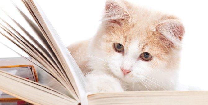 猫がいち早く理解する『単語』5選!理解度チェックの方法とは?