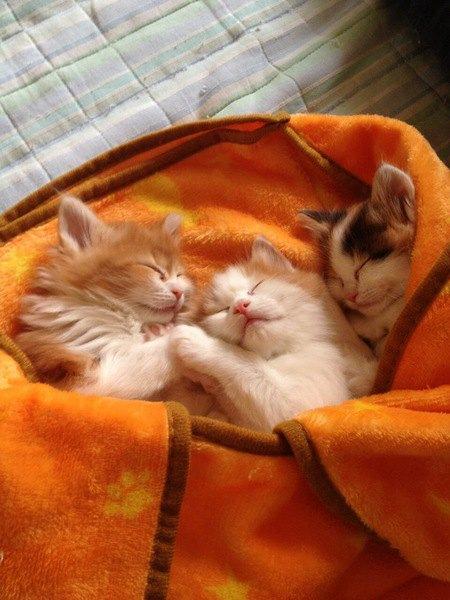 猫が異常に寝ている時に考えられる理由4つ