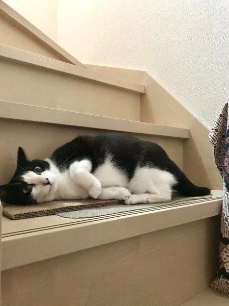 なぜまたたびが効かない猫がいるの?