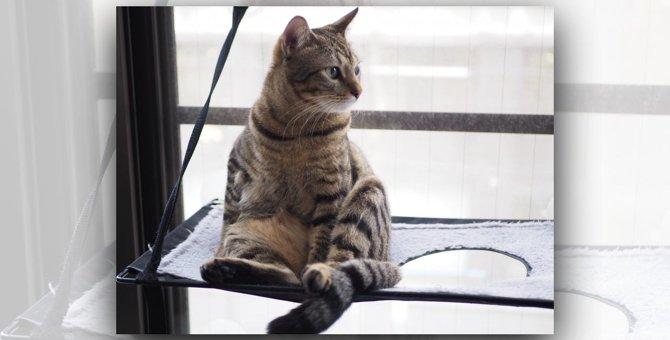 LAYLAの12猫占い【7/13〜7/19】のあなたと猫ちゃんの運勢