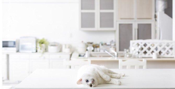 猫がテーブルに乗って困る!防ぐ方法5つ