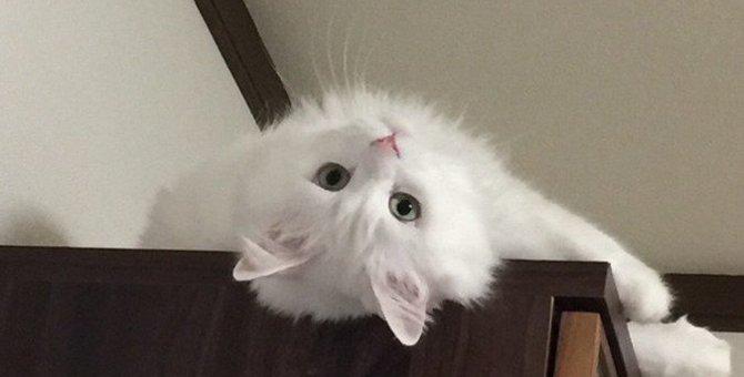 白猫の遺伝子が『最強』と言われる2つの理由!性格や特徴を徹底解剖