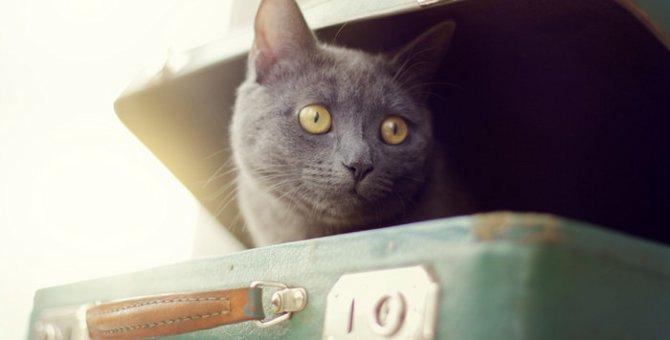 仕事を辞めすべてを手放して、保護猫と人生再出発の旅に出た男性