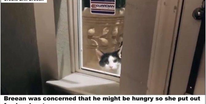 まるでストーカー!迷い猫が飼い主ゲットのためにあらゆる手を尽くした結果