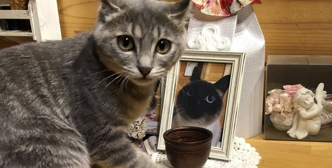 絆は永遠!愛する飼い主さんを笑顔にしたい天国の猫の思いに涙!