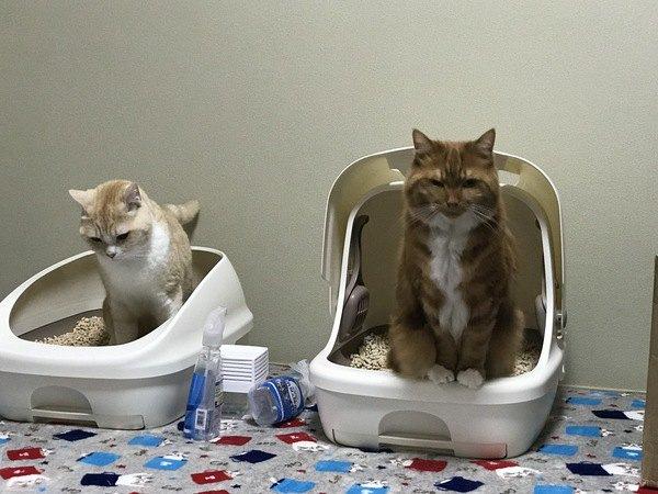 猫同士で『連れション』ってするの?