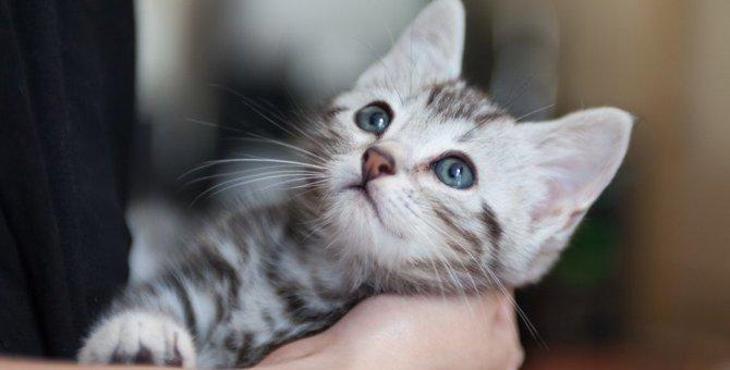 猫を迎える前に絶対しておくべき覚悟6つ
