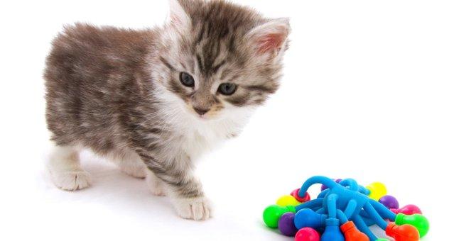 猫には苦手な『色』がある?タブーと言われる理由から好まれる色まで解説