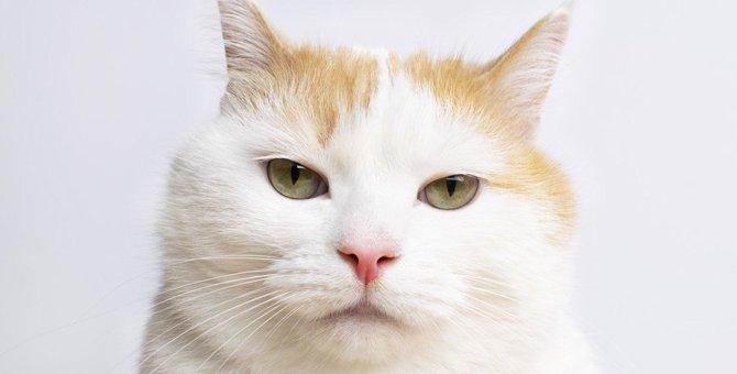 猫を『飼い主嫌い』にさせる絶対してはいけないNG行動5つ