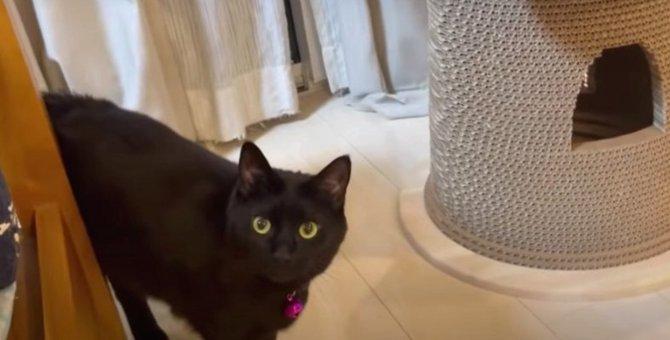 飼い主さんがついてきているか確かめる可愛い黒猫ちゃん♡