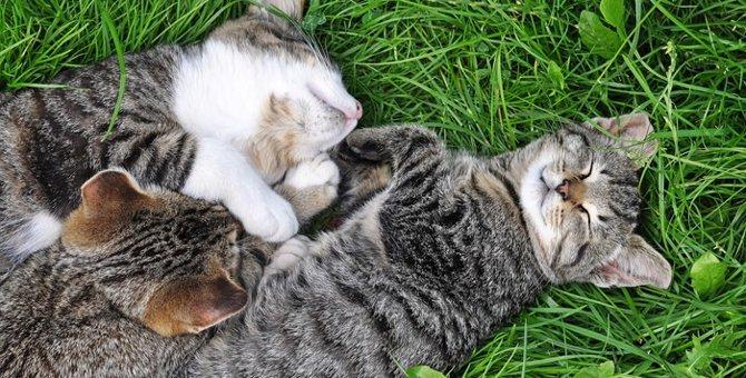 猫が安心している時の仕草や寝相
