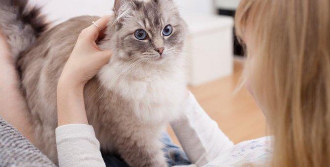 猫の混合ワクチンの種類と効果