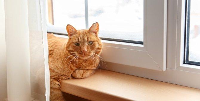 玄関でお見送りした猫はその後どうしてるの?留守中の過ごし方5つ