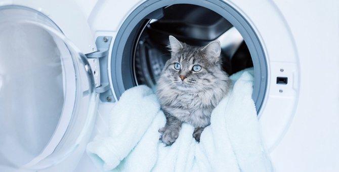 『洗濯物を好む猫』の心理4選