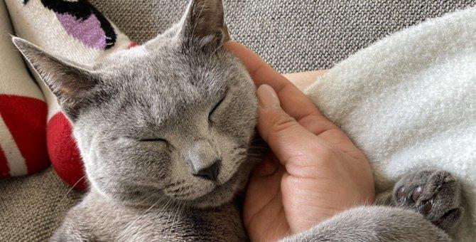猫に『スリスリ』されやすい人の特徴5つ!スリスリしてもらう秘策とは?