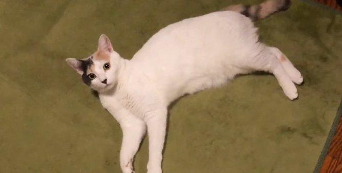 だらけ好きの猫ちゃんが限定パン屋さんを開店!