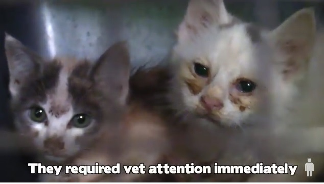 多頭崩壊で保護された猫、衰弱した子は安楽死を勧められるも…