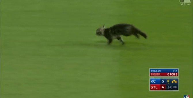 「ここからでられにゃい!」試合真っ最中の野球スタジアムで猫が颯爽と走る!