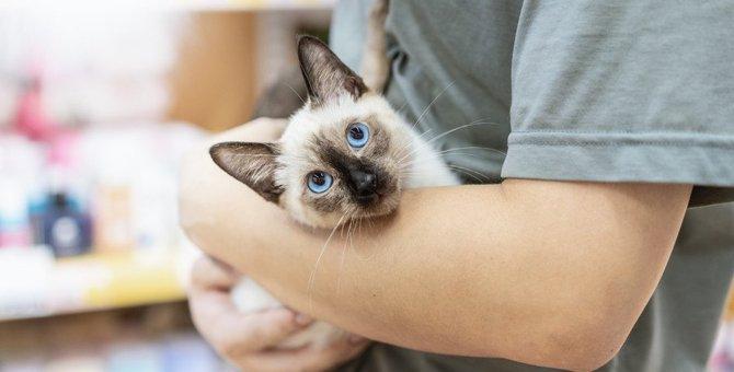 猫が『抱っこ嫌い』になる5つの心理!上手に抱っこする秘訣は?