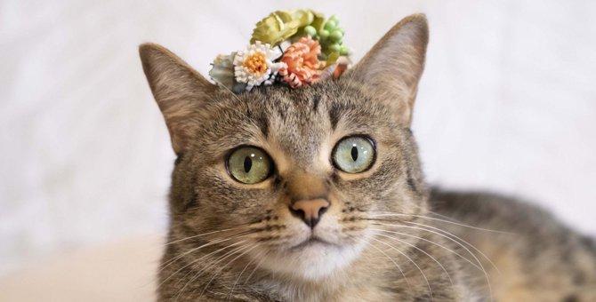 猫が心地良いと感じる『色』3選!不快に感じる色もある?