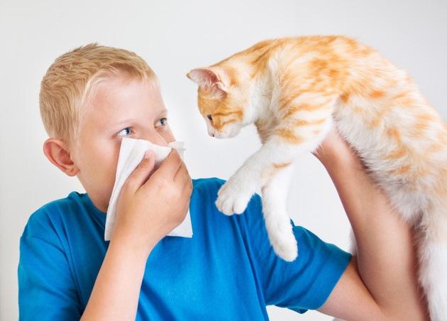 猫アレルギーで湿疹が出た時の原因と対処法