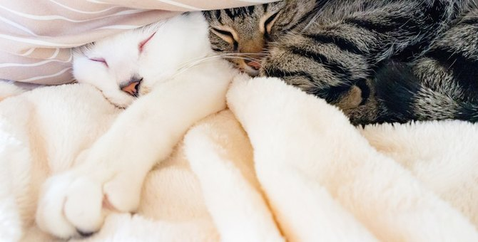 年末は猫が使った物も大掃除しよう!綺麗にする4つの方法