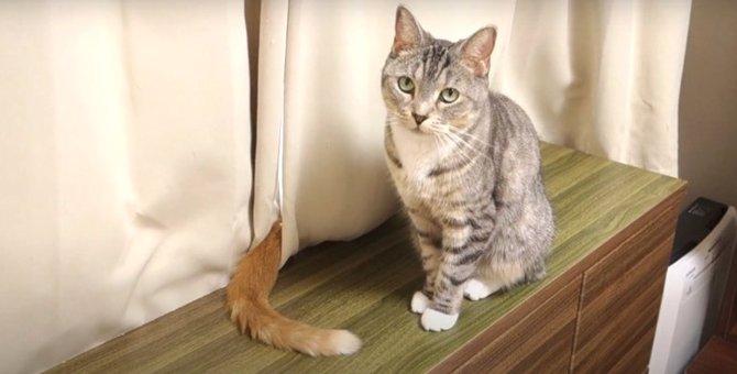 目の前でしっぽがゆらゆら…向上した猫ちゃんのスルースキル