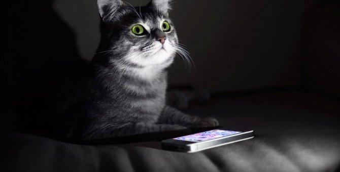猫が主役の面白スマホアプリ!おすすめ3選☆