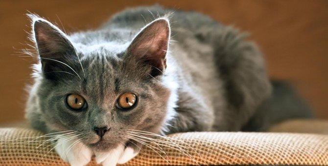 猫が愛情不足を感じる7つのやってはいけない事
