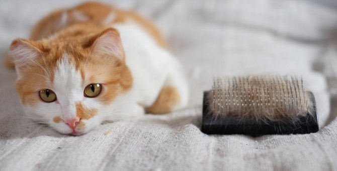 猫がいる家庭にオススメしたい!お掃除グッズ