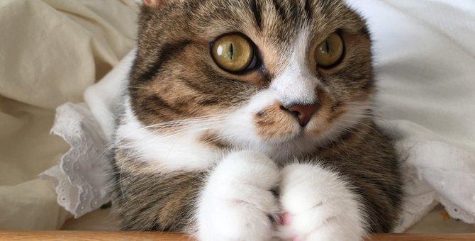 猫がおみやげを飼い主に持って帰ってくる4つの理由