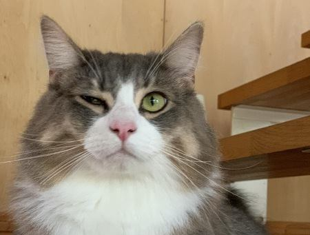 猫が人と意思疎通をとろうとする時の行動5つ