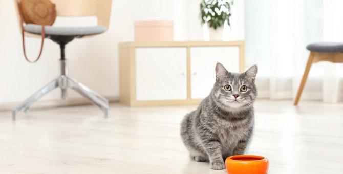 猫が『ドライフード』を食べないときの対策5つ!こんな工夫で改善できるかも?