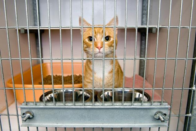 猫のケージの中のレイアウト術!ぴったりなトイレやおしゃれな商品