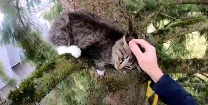 木の上で悲痛な鳴き声を上げる猫……困難な救出作戦の行方は?