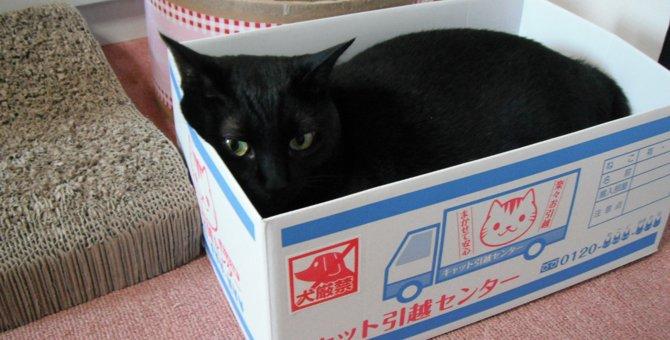 【体験談】子猫を動物病院の里親募集でお迎えしました