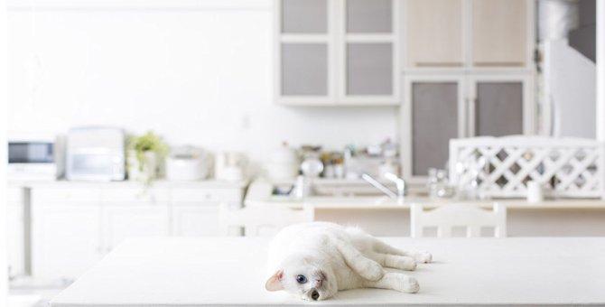 猫が『キッチン』に侵入するのを防ぐ5つの対策