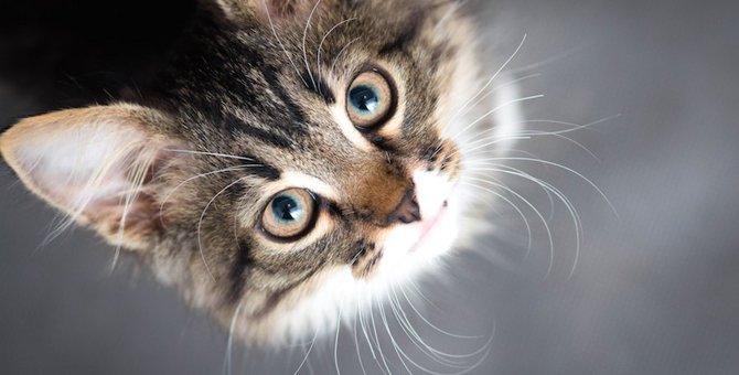 猫が飼い主に熱い視線を送る9つの心理