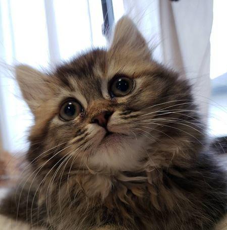 猫が毎朝飼い主をお見送りする心理5つ