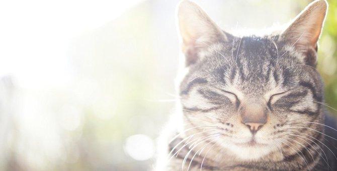 死んだ愛猫と夢の中でお話…猫にまつわる不思議体験